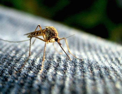 Fever in Returning Traveler P2 – Malaria
